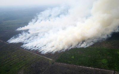 Indonesia: perché il mondo guarda altrove, alla vigilia di COP21?