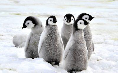 Situazione colonie estive Polo sud e necessità di potenziare l'offerta pubblica