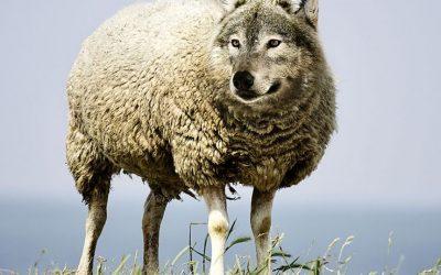 Il lupo perde il pelo ma non il vizio! Ancora una volta il CdS non rispetta l'articolo 99 cpv 2 della LGC