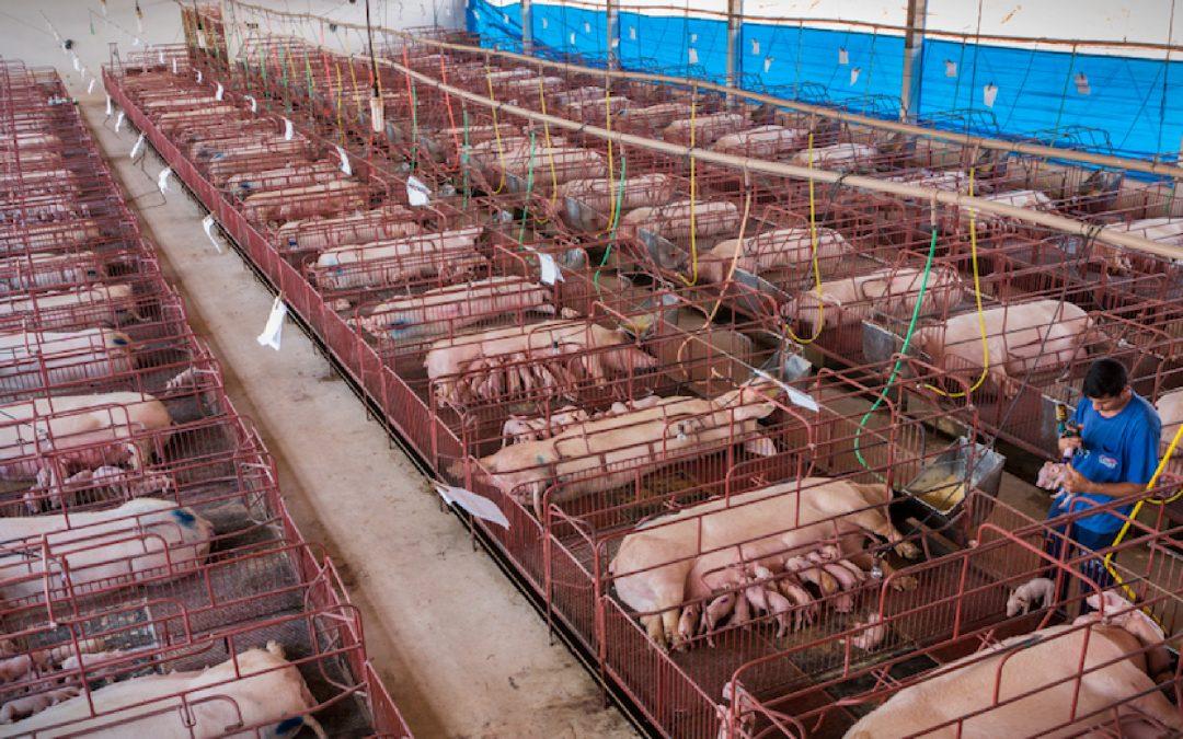 Lo sfruttamento degli animali nel modo di produzione capitalistico
