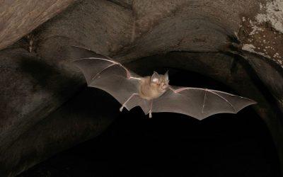 Non date la colpa al pipistrello