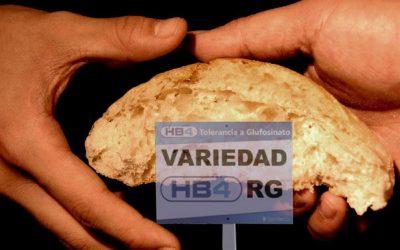 La prima volta del pane Ogm